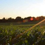 non-GMO corn and soybean ingredient suppliers