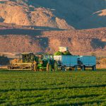 grain buyers and specialty grower contracts